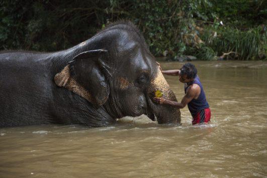 Medio ambiente y animales